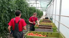 Greenhouse Management - stock footage