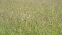 Waving blades of grass Stock Footage