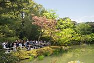 Tourist visiting Kinkakuji, Kyoto's golden pavilion. Stock Photos