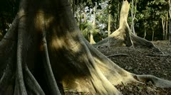 Tropical dry forest Stock Footage