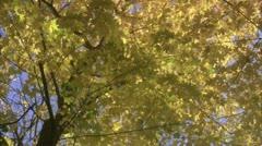 Broad-leaf tree, Stockholm Stock Footage