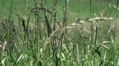 Swaying grass Stock Footage