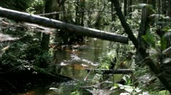 Impenetrable forest river - stock footage