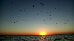 Thousands of birds on the background of a beautiful sunset Stock Footage