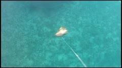 Shark Feeding Stock Footage