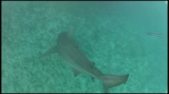 Sharky Waters Stock Footage