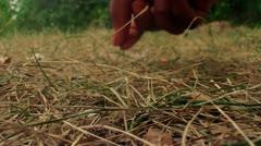 Grass Picking Macro Close Up (HD) Stock Footage