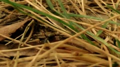 Ant Crawling Close Up Scene (HD) Stock Footage