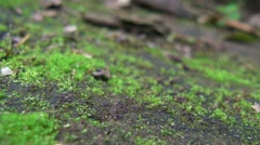 Trail of Ants [p2] Stock Footage