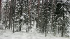 Wintry pine woods Stock Footage