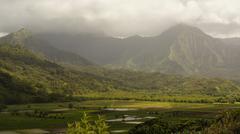 Rainforest valley.JPG Stock Photos