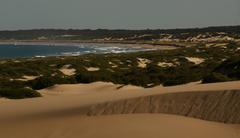 Sand Dunes @ Ocean.JPG Stock Photos