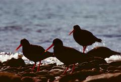 Birds at the beach.JPG Stock Photos