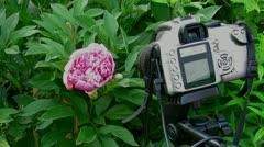 flowers awaken - stock footage