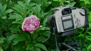 Stock Video Footage of flowers awaken