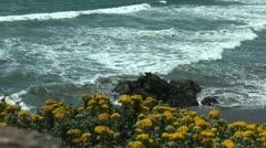 Ocean, yellow flowers, waves, beach in Carmel Stock Footage