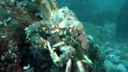 Stock Video Footage of Kamchatka crab