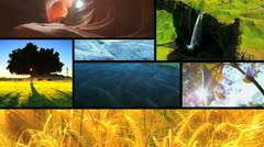Montage of Natures Ecosystems  Stock Footage