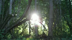 fairy tale forest - stock footage