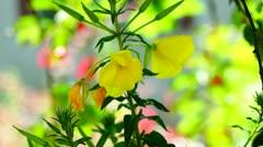 Flower in spring Stock Footage