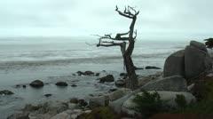 Ghost Tree Carmel 2 Stock Footage