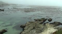 Sea Lions Carmel Stock Footage
