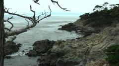 Ghost Tree Carmel Stock Footage