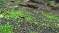 Trail of Ants [p3] Stock Footage
