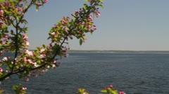 Across Cherry Blossoms to Larchmont Gazebo Stock Footage