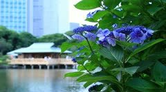Tea house with Shiodome's skyscrapers in the background. Stock Footage