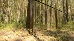 Road and fence in a pine forest Stock Footage