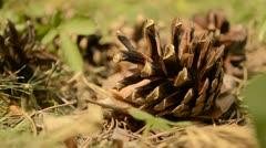 Pine cones close up Stock Footage