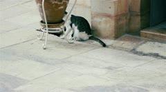 Cat at Saint Savas monastery near Jerusalem, Israel Stock Footage