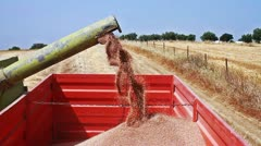 Harvested grains being deposited at a trailer Stock Footage