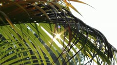 Sunshine Through Palm Leaves Slider 3 Stock Footage