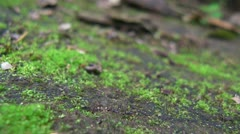 Trail of Ants Stock Footage