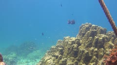 Tropical Underwater Beautiful Fish Clip 1 Stock Footage