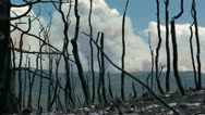 Stock Video Footage of Forest fire smoke through charred burned trees P HD 0989