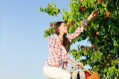 cherry tree harvest summer woman sunny countryside - stock photo