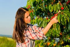 Stock Photo of cherry tree harvest summer woman sunny countryside