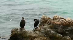 Cormorants, Majorca Stock Footage