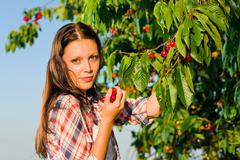 cherry tree harvest summer beautiful woman sunny - stock photo