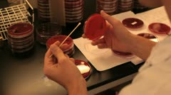 Researcher in laboratory stroking a petridish with a cotton swab Stock Footage