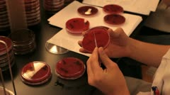 Researcher in laboratory brushing a petri dish Stock Footage