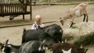 Children and goats at the zoo Stock Footage