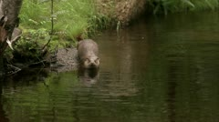 An otter Stock Footage