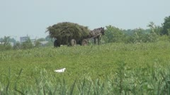 Cart and Horse in the Corn Field, Agriculture Stock Footage