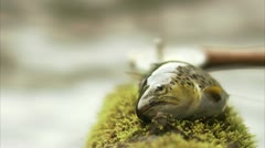 Fly-fishing, a fish Stock Footage
