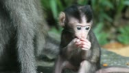 Monkey and baby Stock Footage