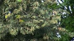 Tropical birds in tree on windy day Stock Footage